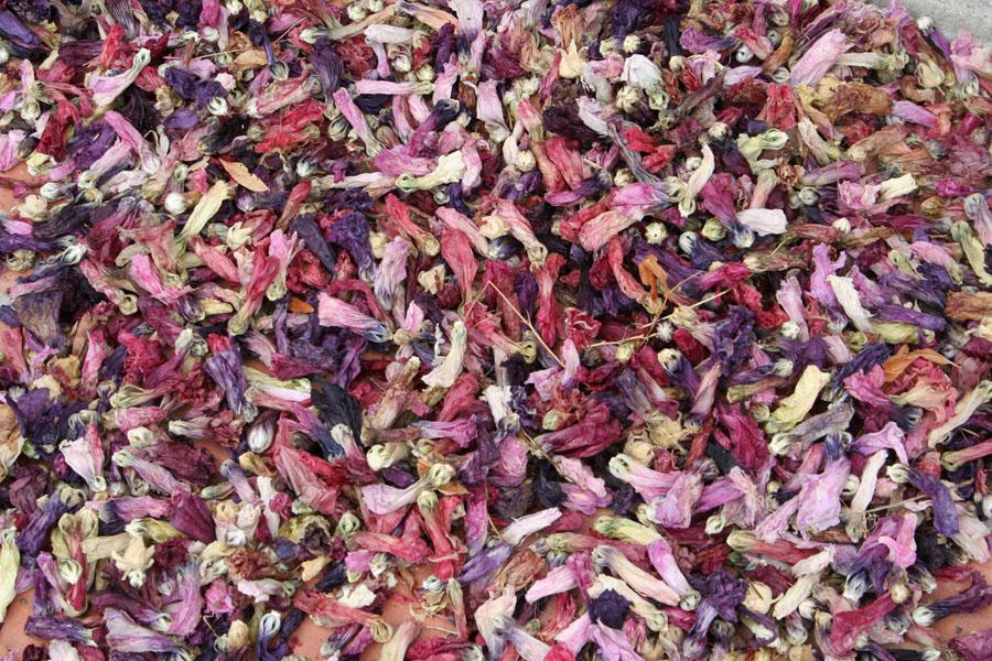 2-petales-de-rose-tremiere-web