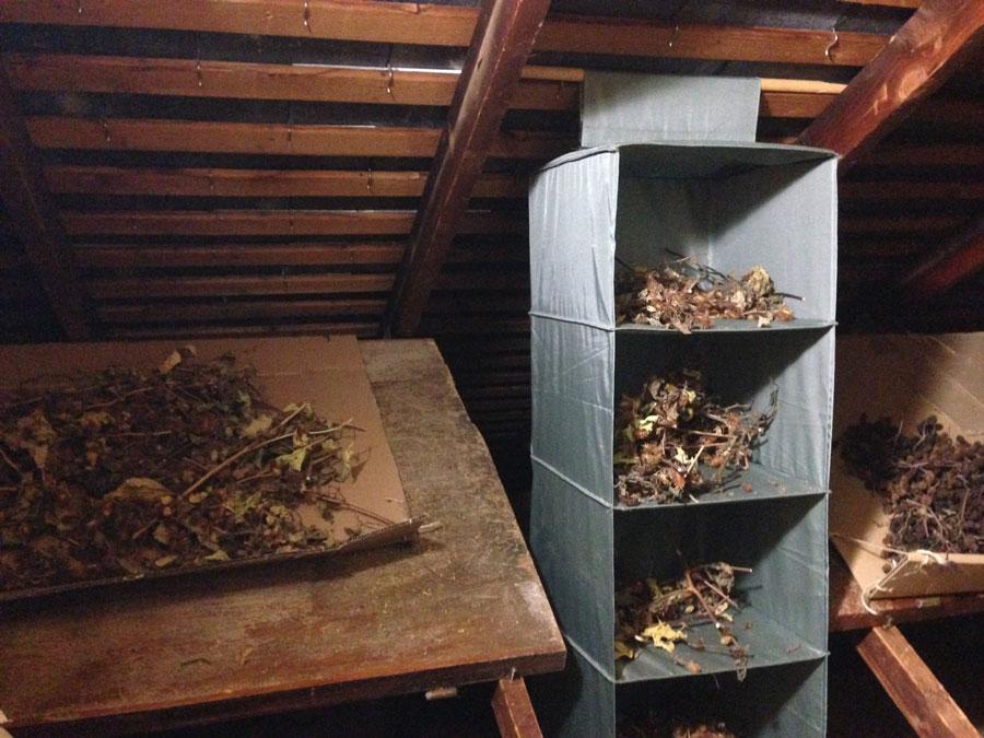 grenier-sechoir-plantes-annelise-dufourneaud