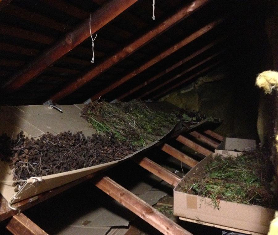 grenier-sechoir-plantes-annelise-dufourneaud2